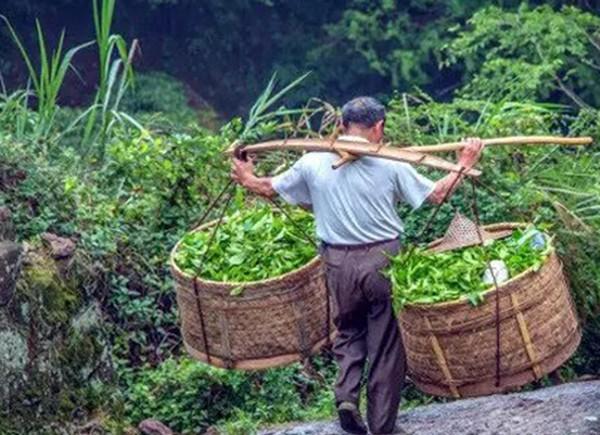 Черное Золото Хэй Цзинь любимый чай